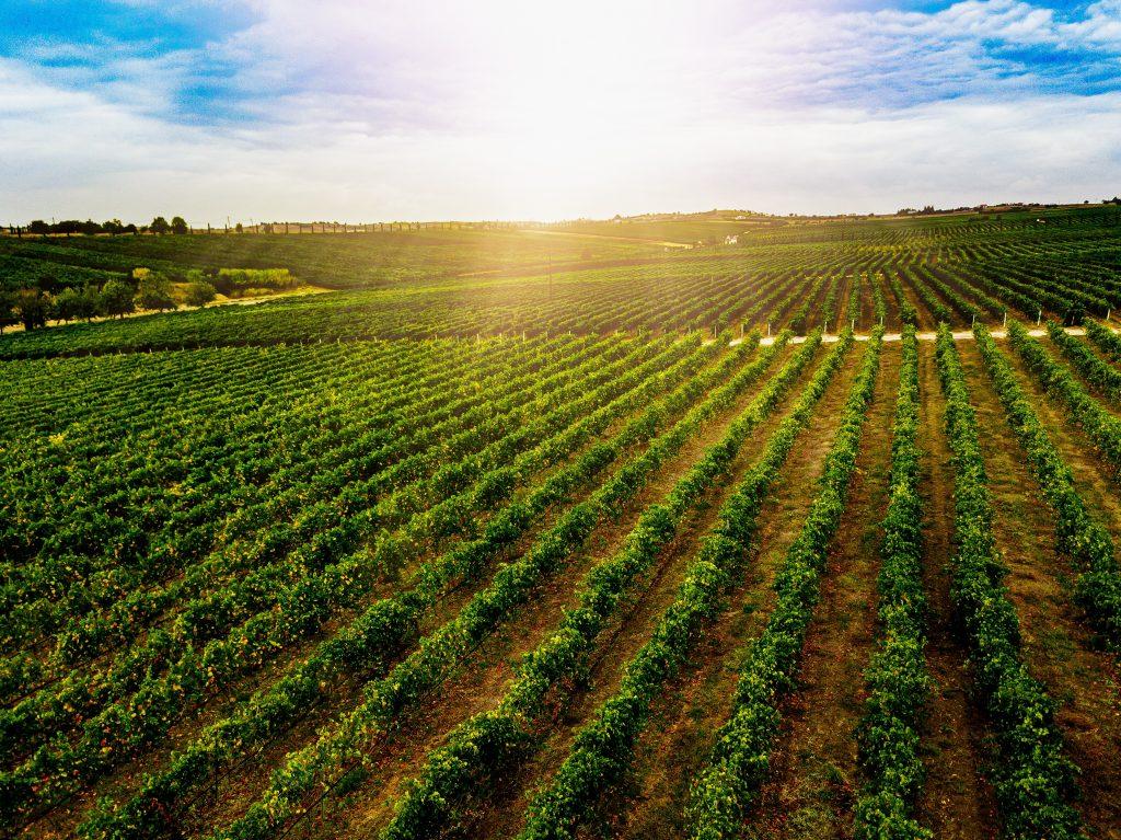 Aerial view of beautiful Vineyard landscape in Greece.