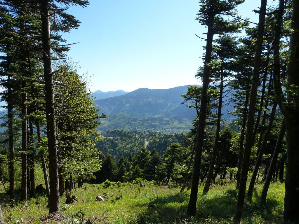 Δάσος Στενής Ευβοίας ©Capostolo/Wikipedia