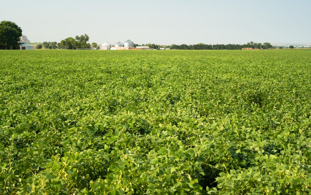 field-of-beans-farm-agriculture-farmer-field-growt-PXVQTYD