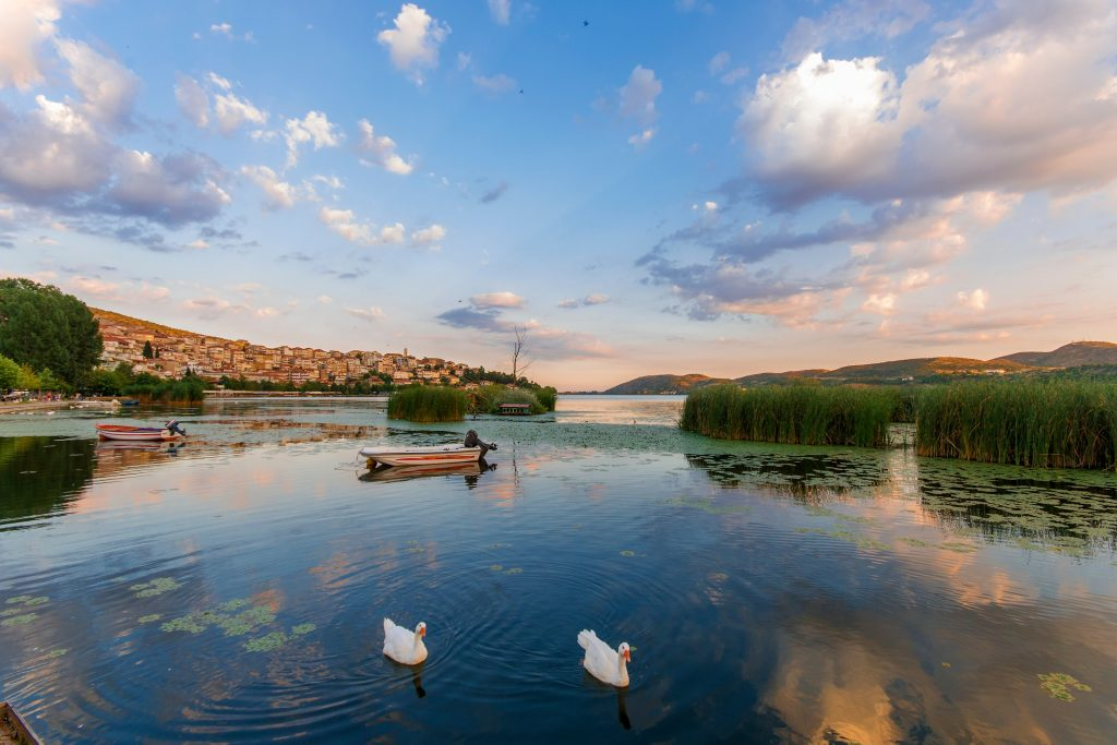 swans-in-a-lake-in-the-city-of-kastoria-in-norther-B6D5BFF