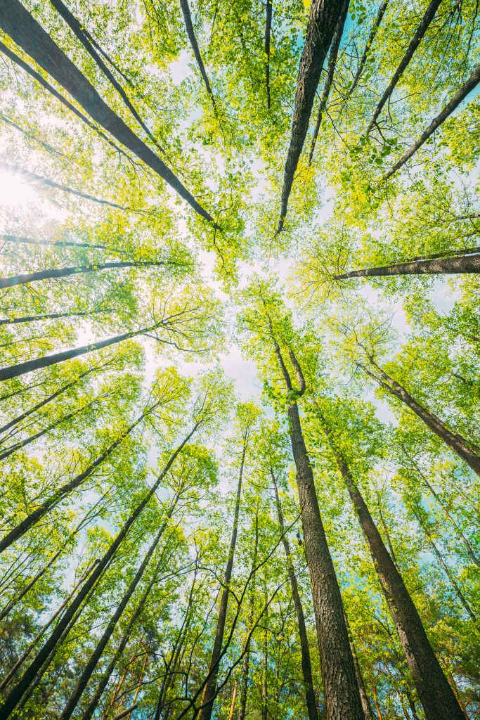 looking-up-in-beautiful-pine-deciduous-forest-tree-2021-08-30-06-29-22-utc
