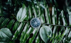 Compass among fern leaves in a tropical jungle. Adventure discovery navigation concept